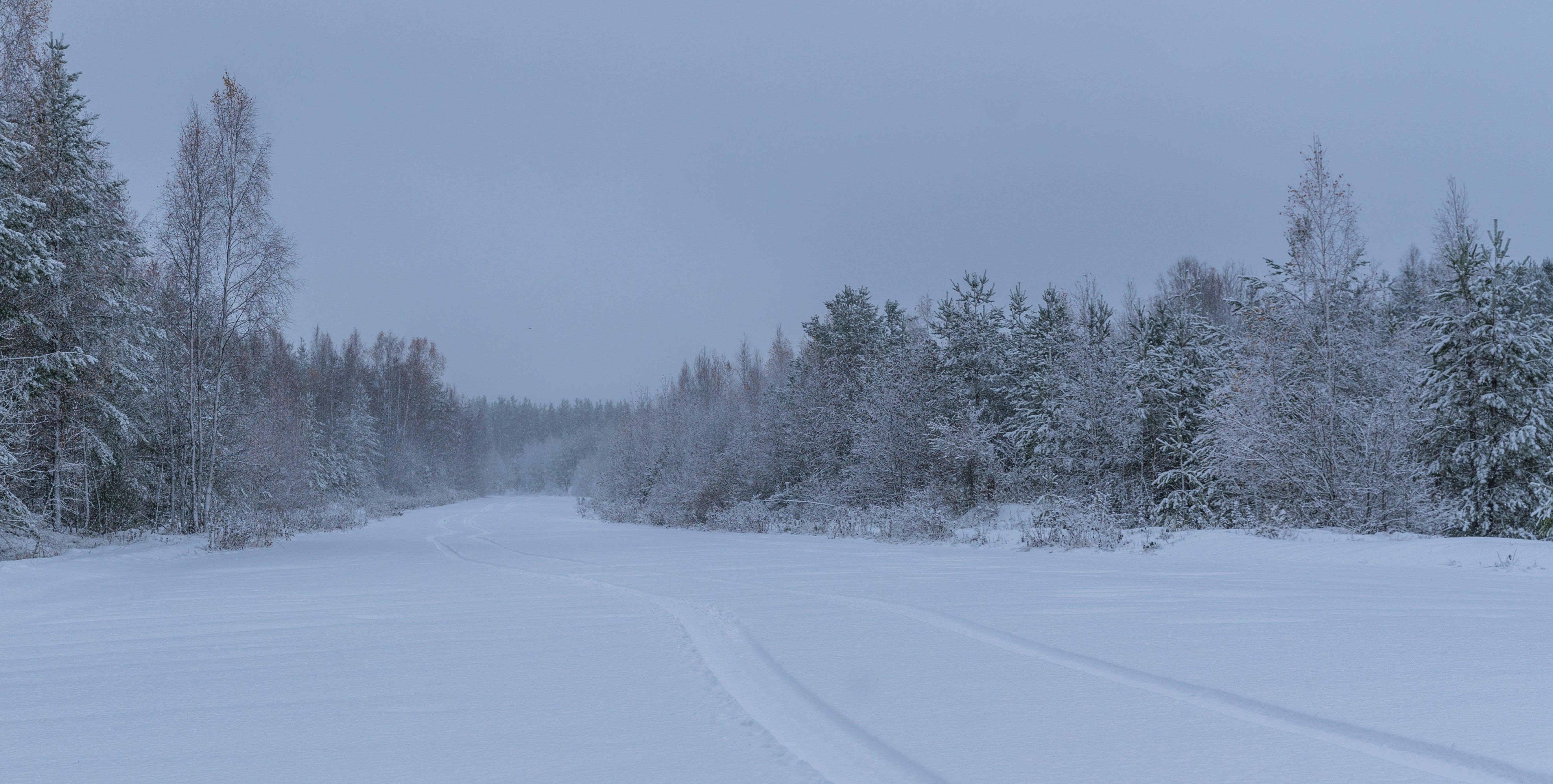 besneeuwd, bevroren, bomen