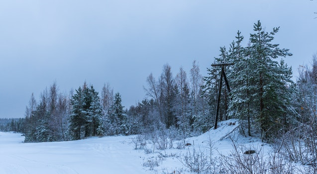 Free stock photo of snow, landscape, forest