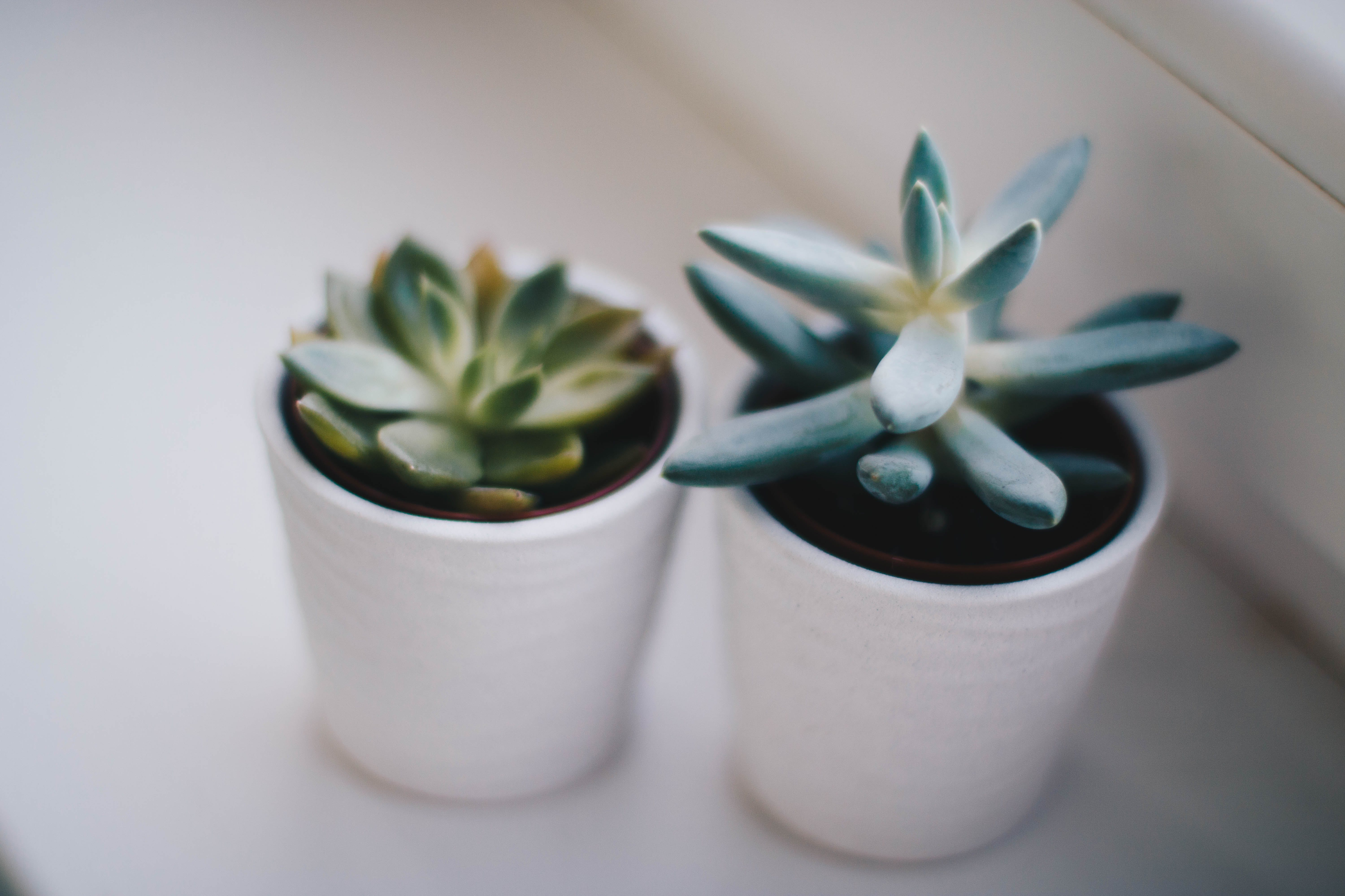 Two Green Succulent Plants