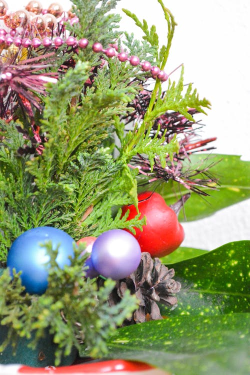 Free stock photo of christmas, piece, plant