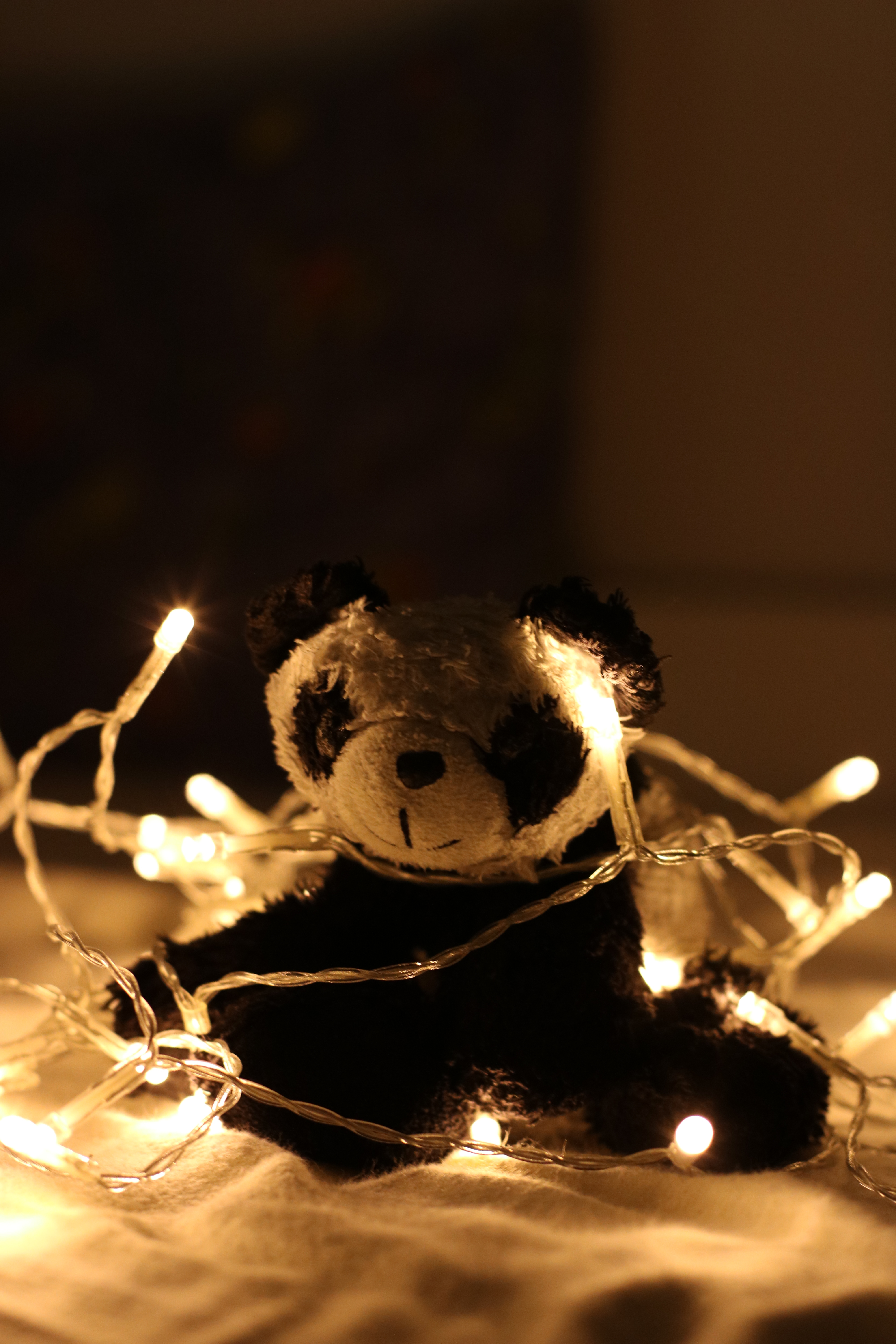 Panda Plush Toy Surrounded by Beige Light Strings