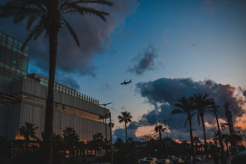 Town street with buildings and palms under sky with plane