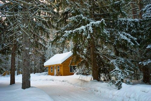 Бесплатное стоковое фото с вечнозеленый, дерево, деревья, домик