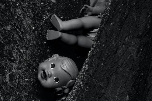 Fotos de stock gratuitas de blanco y negro, corteza de árbol, desmantelar