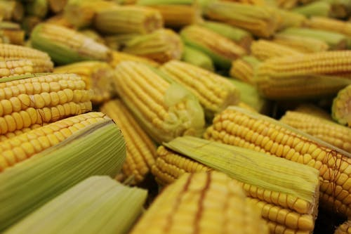 Yellow Corn on Brown Wooden Table