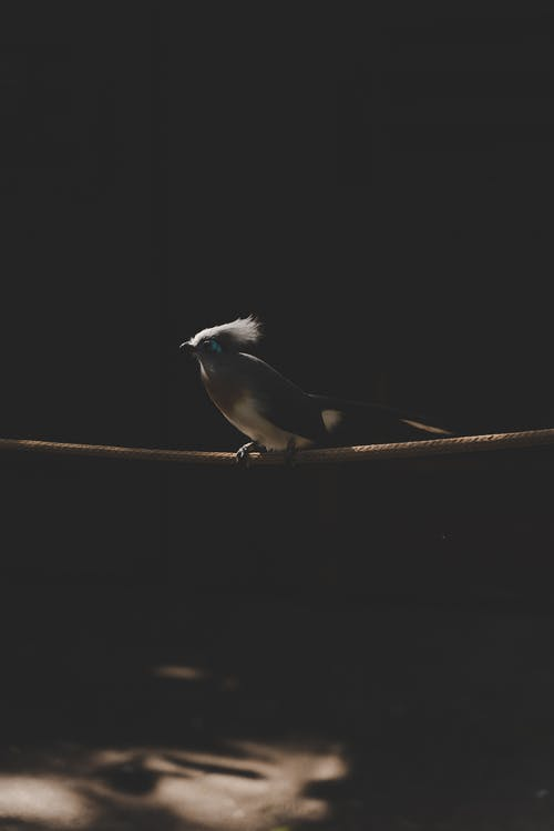 Bird Perched on a Rope