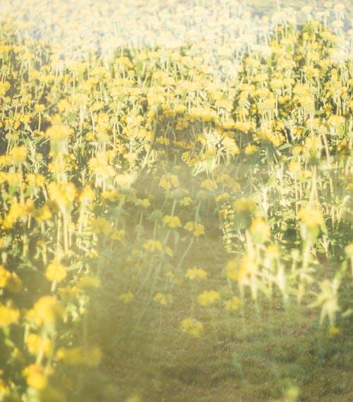 alan, bitki örtüsü, bitkiler içeren Ücretsiz stok fotoğraf