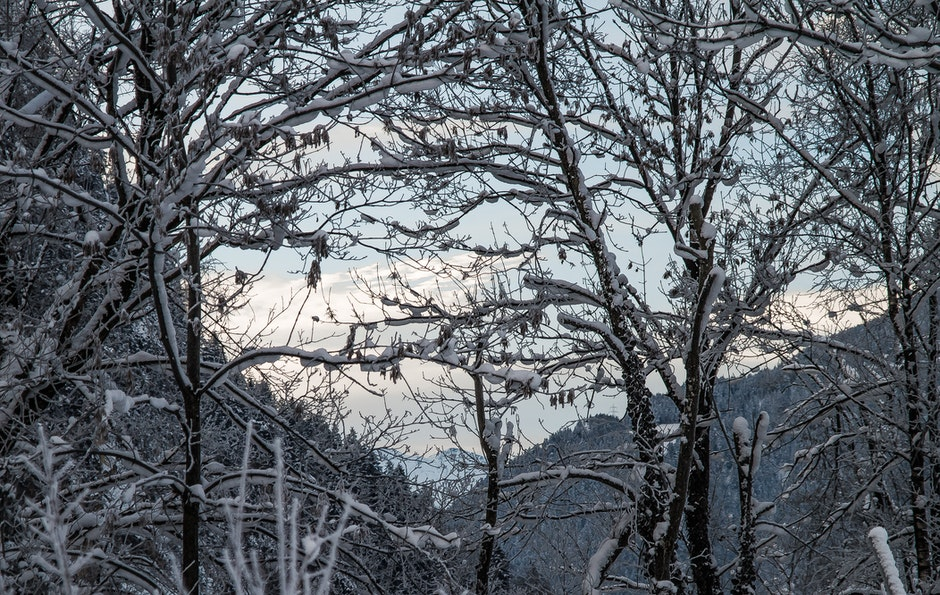 branches, cold, freeze