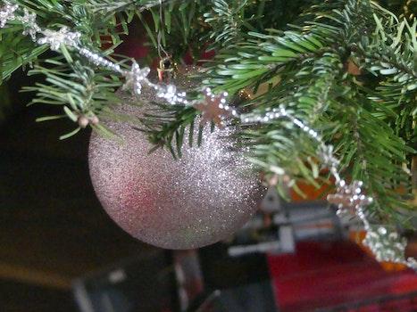 Free stock photo of sphere, christmas tree