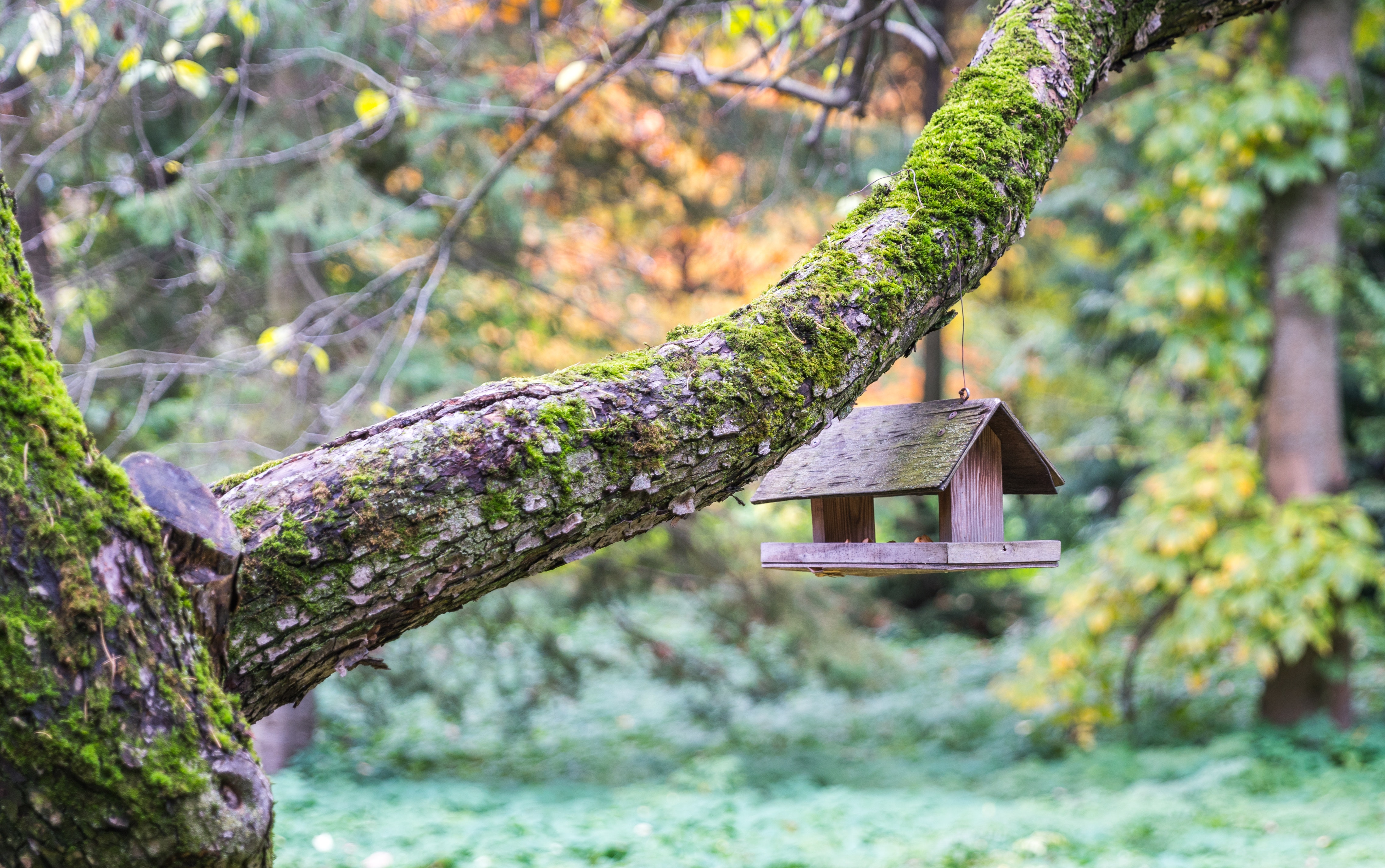 Brown Wooden Bird Cage Hangs On Gray Tree Branch Free Stock Photo