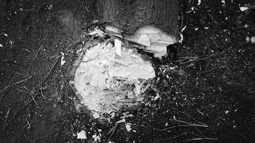 Noel, Noel günü, ölü ağaçlar, siyah ve beyaz içeren Ücretsiz stok fotoğraf