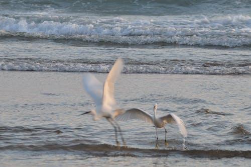 Foto d'estoc gratuïta de aus aquàtiques