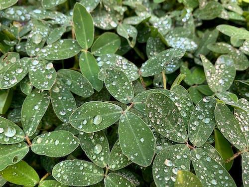 Free stock photo of dark green, dew, dewdrops
