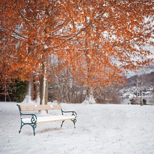 Foto stok gratis alam, Austria, badai salju, bangku