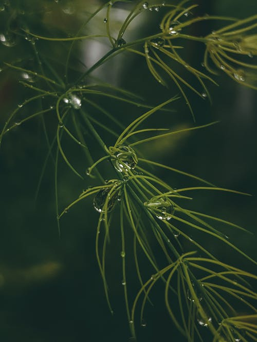 Close-Up Photo of Water Dew on Green Plant