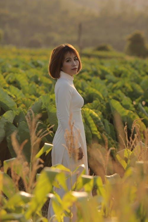 Kostnadsfri bild av ao dai, asiatisk kvinna, kvinna