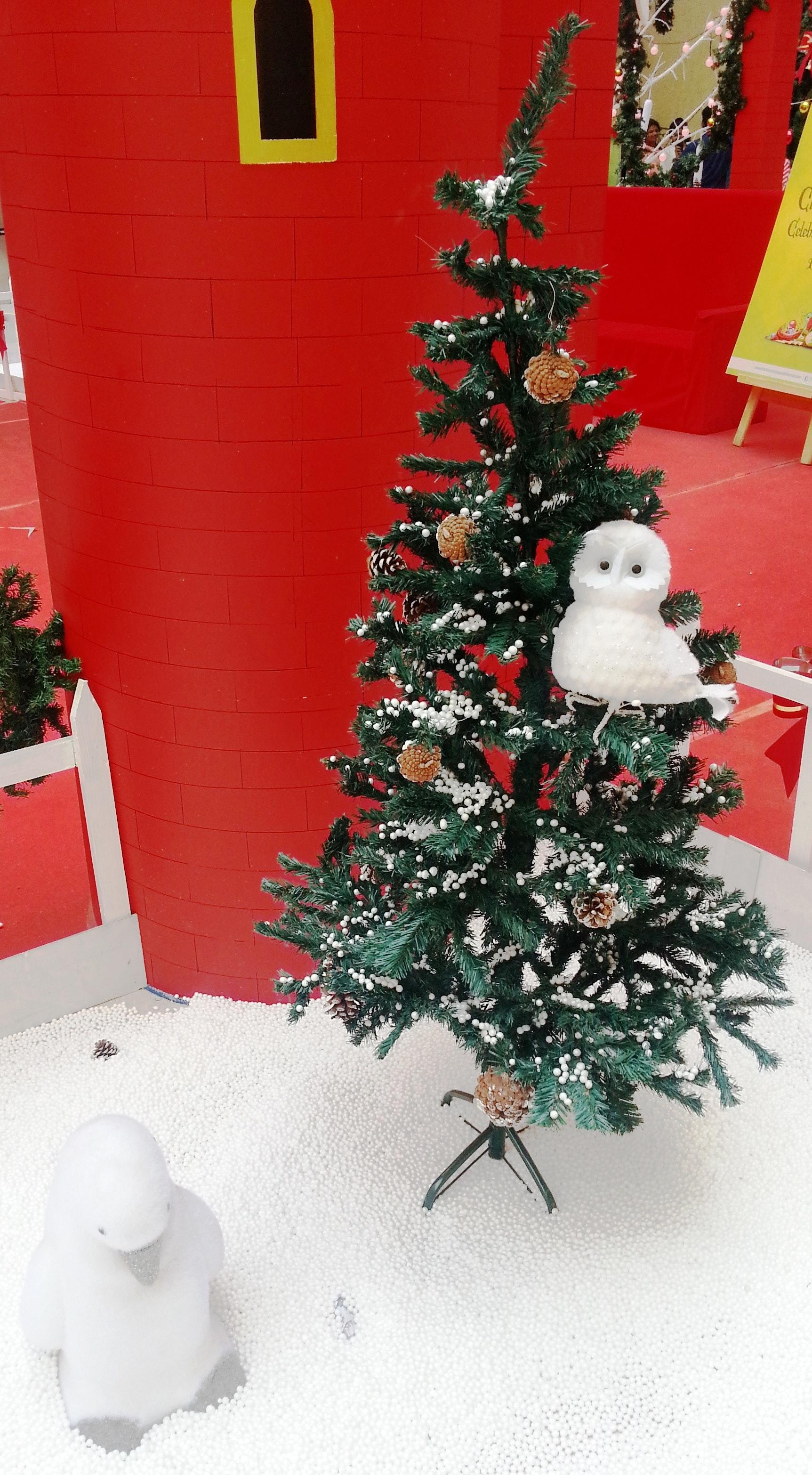 Weihnachten Hd Bilder.Kostenloses Foto Zum Thema Hd Wallpaper Weihnachten Weihnachtsbaum