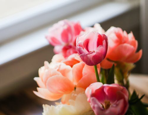 bitki örtüsü, buket, Çiçek açmak, Çiçekler içeren Ücretsiz stok fotoğraf