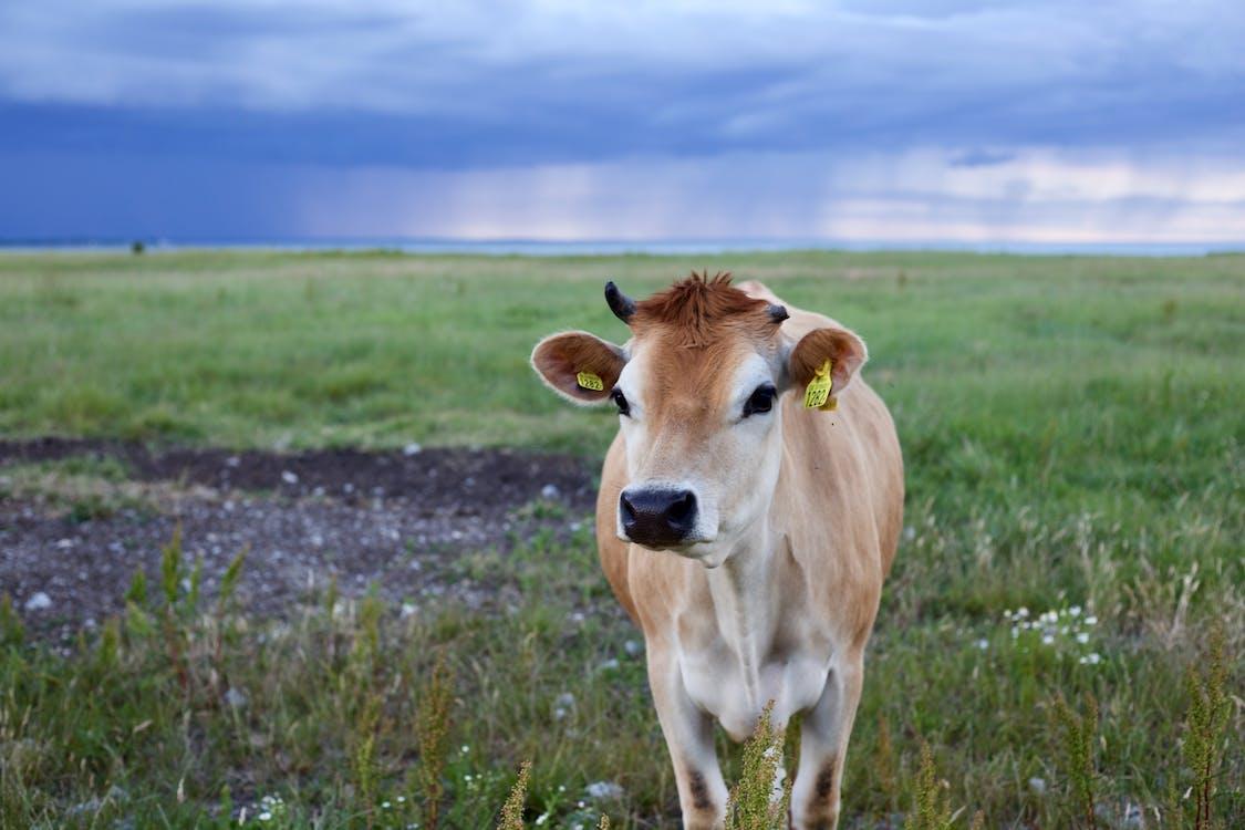 agriculture, animal, arrière-plan