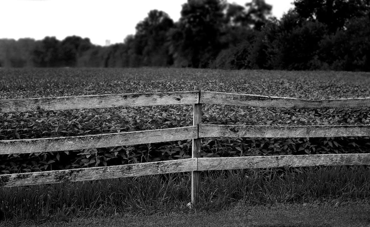 bondgård, dagsljus, fält