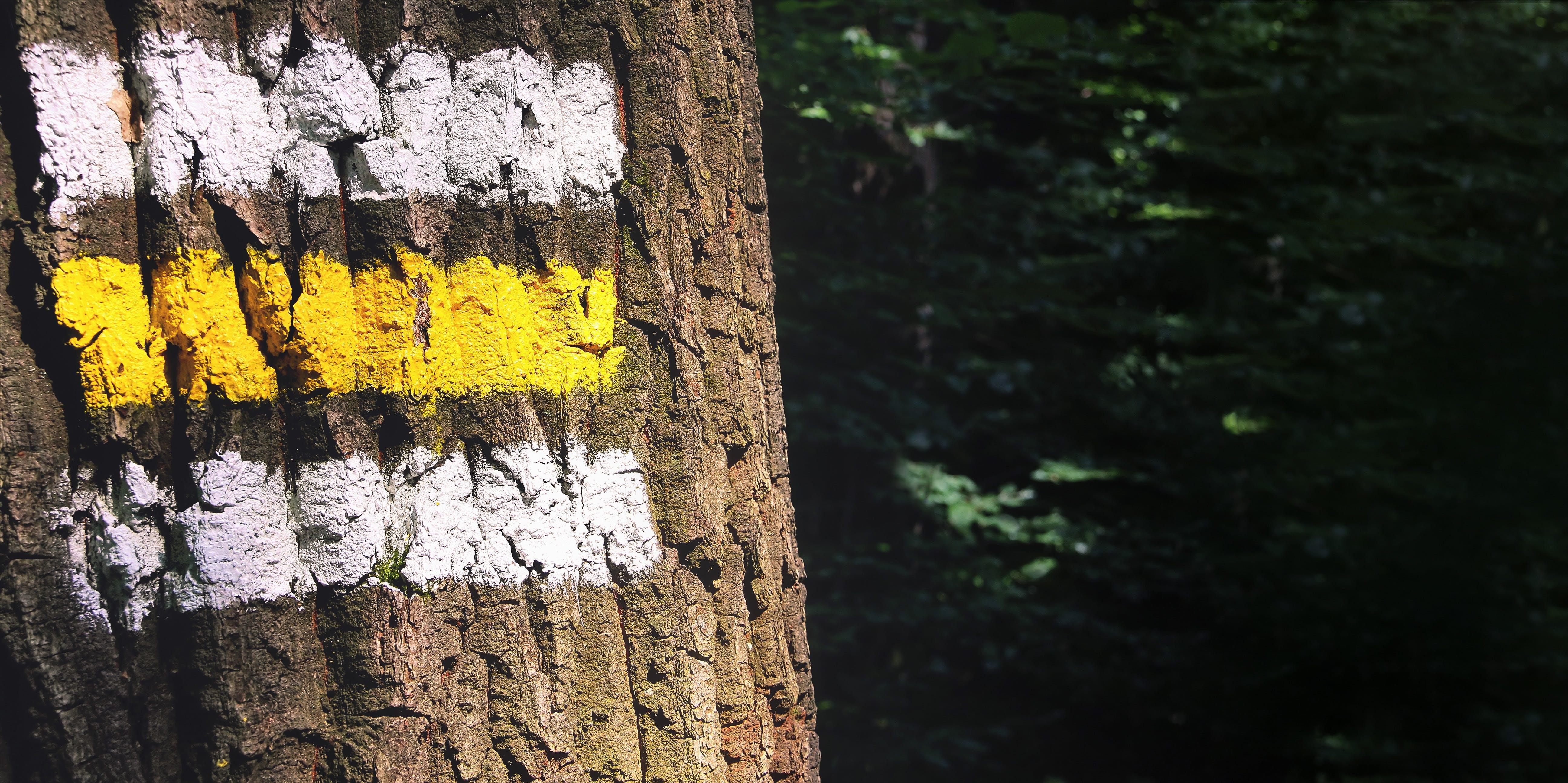 Darmowe zdjęcie z galerii z bagażnik, drzewa, farba, kierunkowskaz
