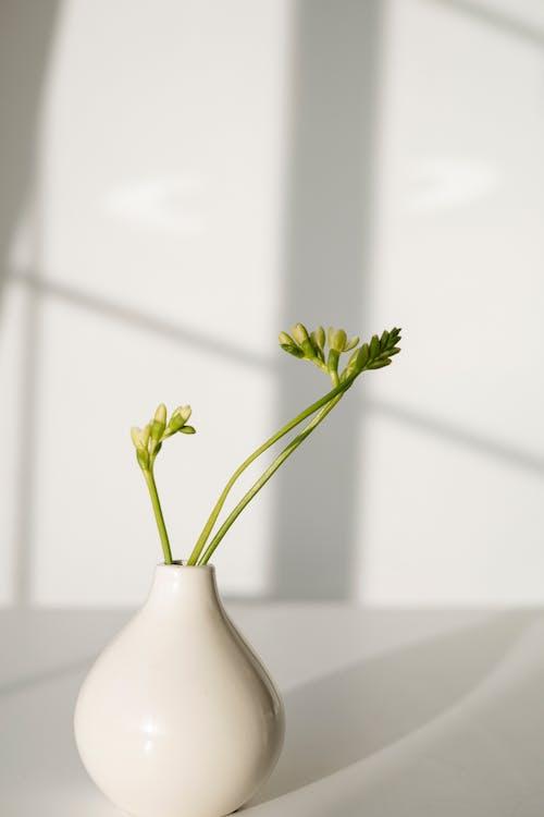 Imagine de stoc gratuită din frunze, frunziș, fundal alb