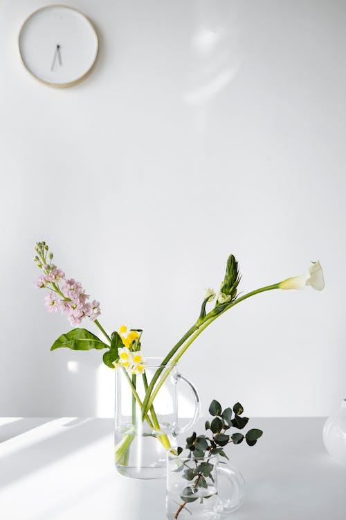 Ilmainen kuvapankkikuva tunnisteilla asetelma, kasvikunta, kirkas