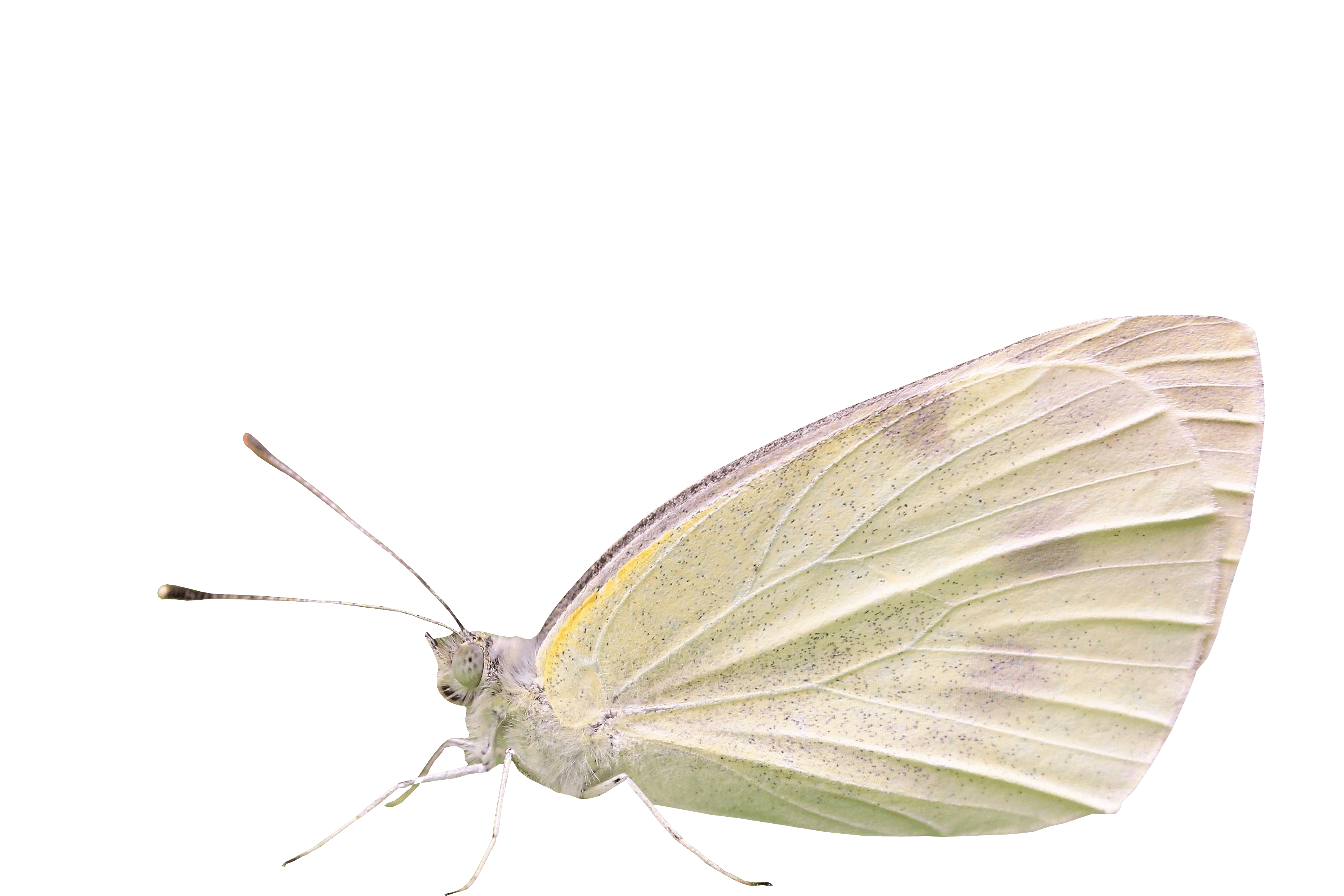 Free stock photo of animal, awesome, beautiful, butterflies