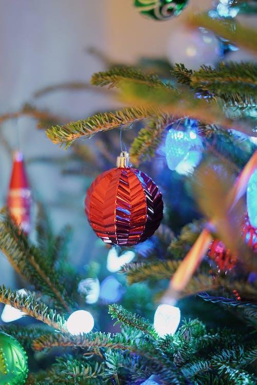 kostenloses foto zum thema weihnachten weihnachtsbaum. Black Bedroom Furniture Sets. Home Design Ideas