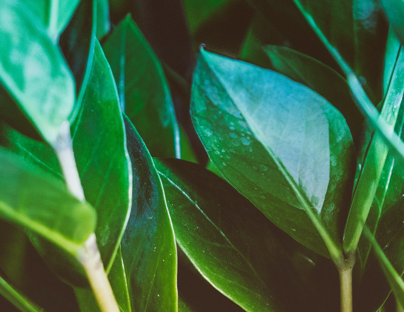 Green Ovate Leaf Plant in Close Up Photography