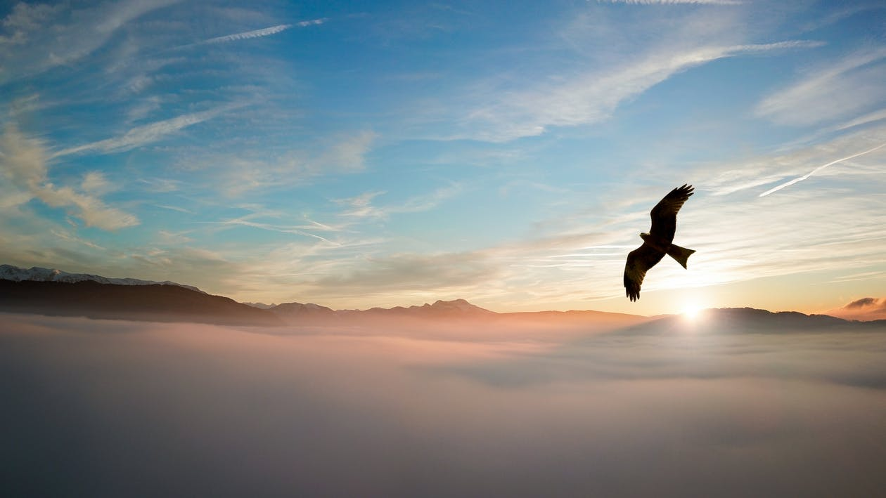 àguila, alba, cel