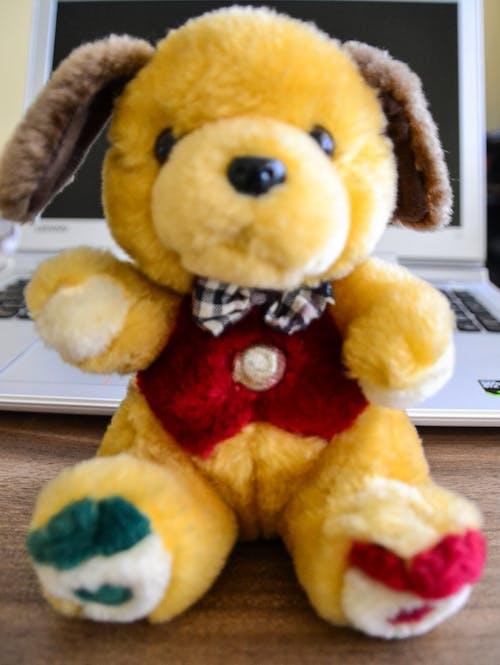Gratis lagerfoto af Babylegetøj, bjørn, brun bjørn, Hej