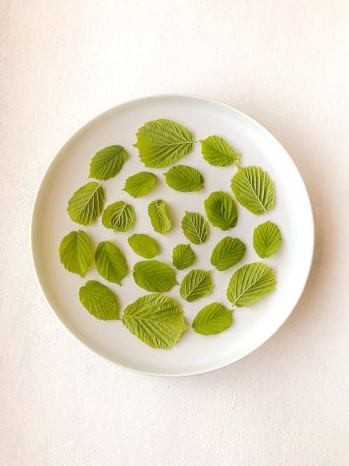 Green and White Round Ceramic Plate