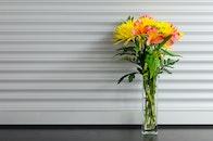 light, flowers, yellow