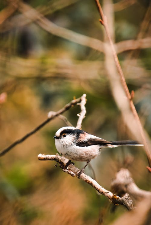 Close-Up Shot of a Sparrow Perched on a Twig