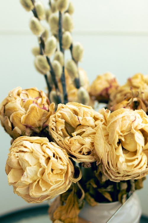 Yellow Flower Buds in Close Up Photography