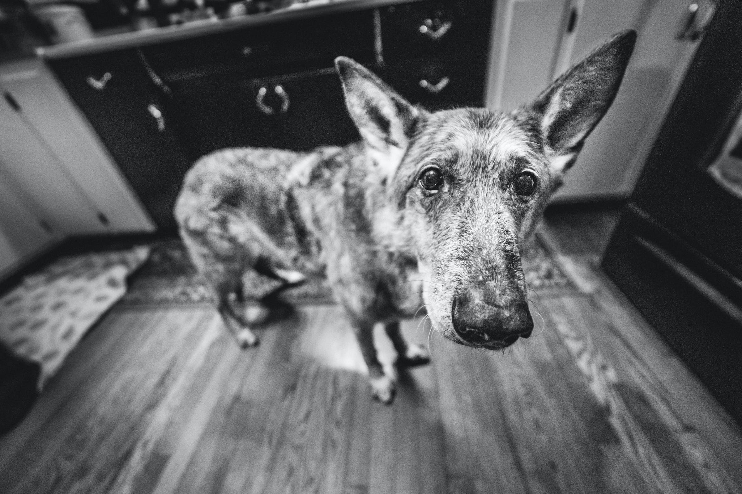 Free stock photo of 14mm, animal, animals, canine