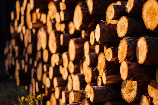 Free stock photo of wood, forest, evening, logs