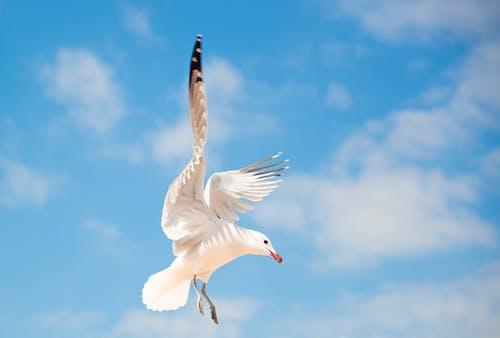 คลังภาพถ่ายฟรี ของ การบิน, ท้องฟ้า, ท้องฟ้าสีคราม