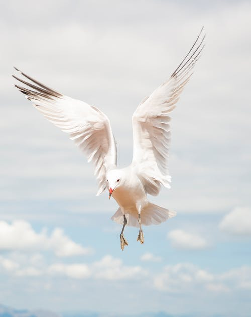 Foto profissional grátis de animal, ave, ave marinha