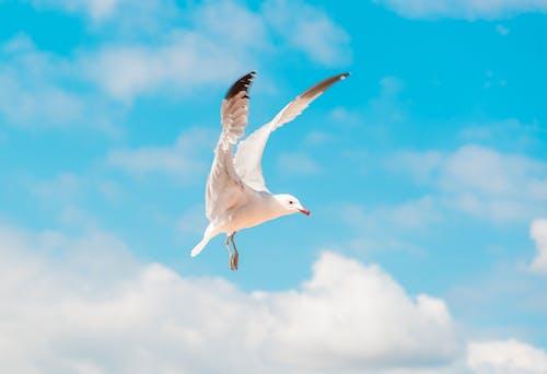 คลังภาพถ่ายฟรี ของ การบิน, ท้องฟ้าสีคราม, ท้องฟ้าสีฟ้า