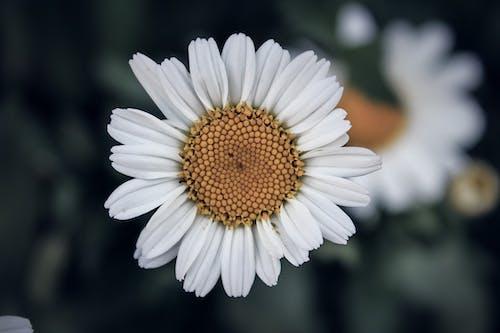 Kostenloses Stock Foto zu natur, schöne blumen