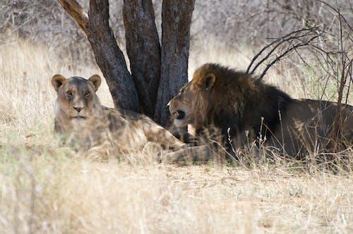 Immagine gratuita di africa, barbaro, cacciatore