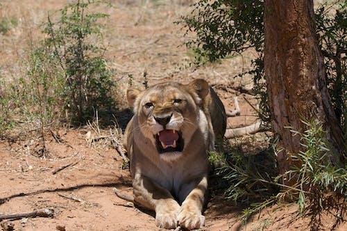 Immagine gratuita di animale, animale selvatico, fauna selvatica
