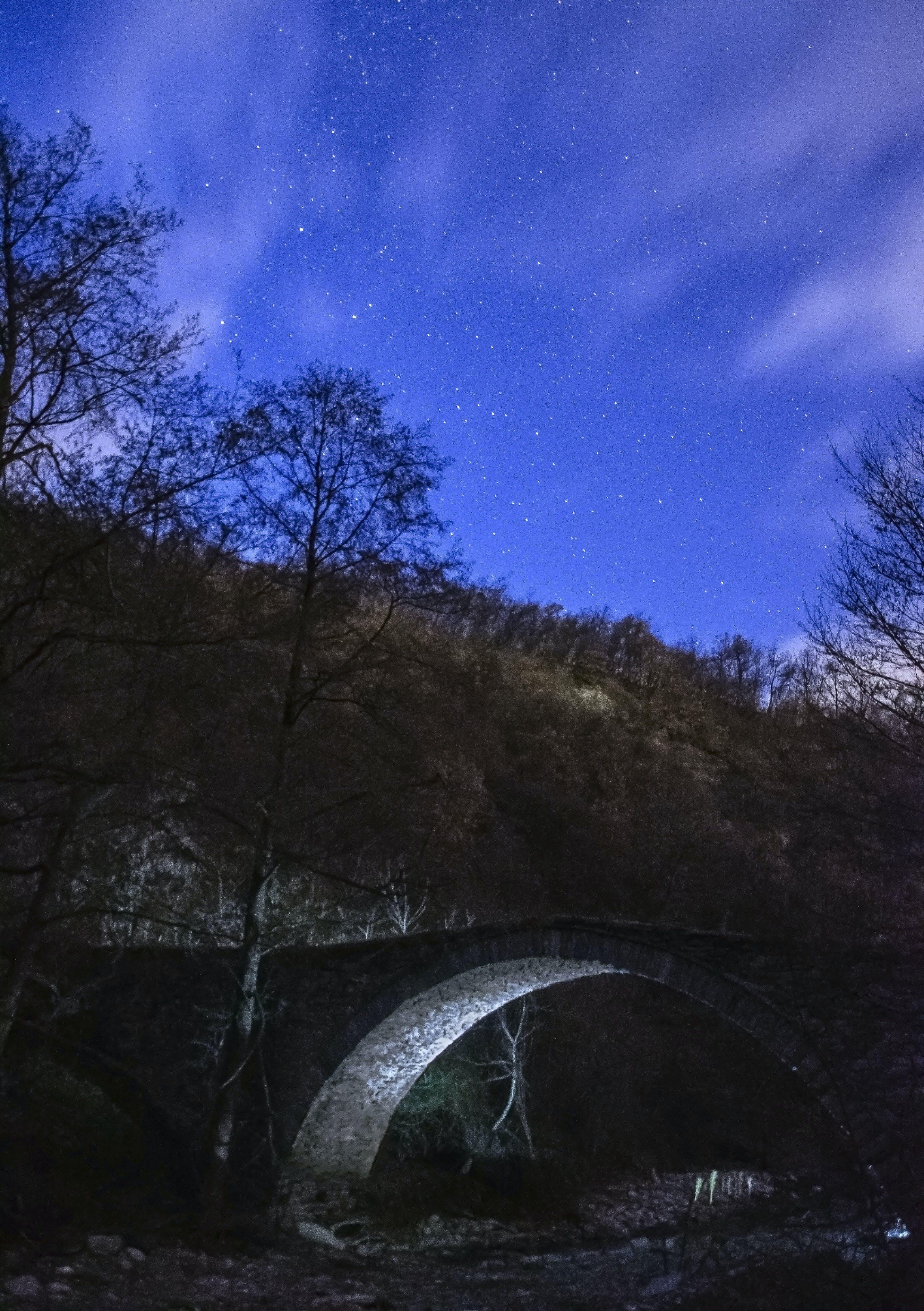Gray Concrete Bridge Near Trees