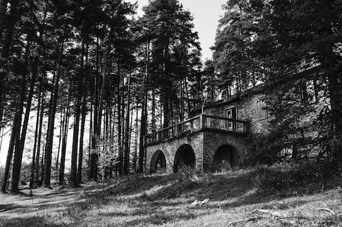 Základová fotografie zdarma na téma borovice, černobílý, chodník, denní světlo