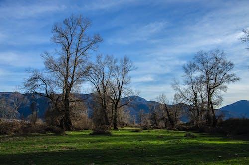 Gratis lagerfoto af bane, bjerg, dagslys, græs