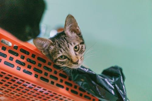 Brown Tabby Cat Lying on Plastic Rack