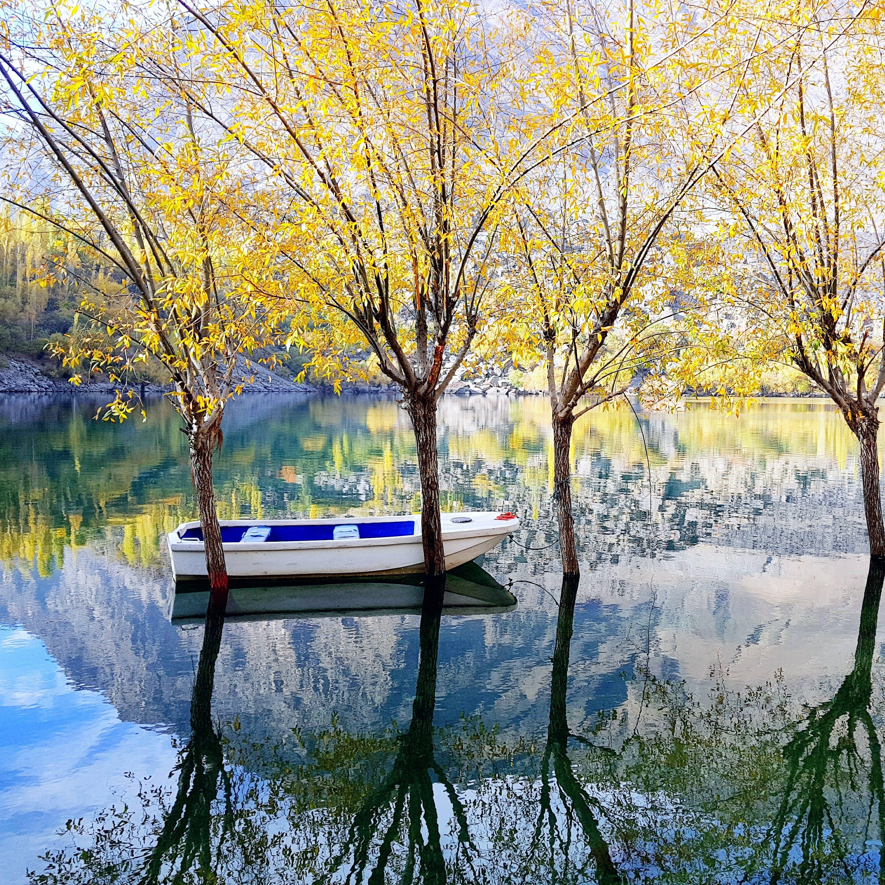 คลังภาพถ่ายฟรี ของ การทาสี, การสะท้อน, งดงาม, ต้นไม้