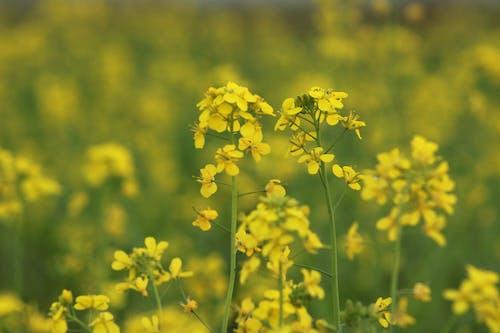 Free stock photo of mellow yellow, mustard, yellow